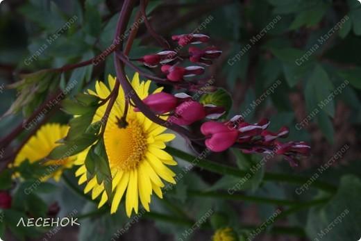"""Вот такое настроение и такая работа родилась, глядя на столь чудесное творение природы, цветок, который растет у нас в саду. Дицентру называют ласково и немного грустно: """"Разбитое сердце"""" по-русски, """"Сердечко Жаннетты"""" по-французски, """"Цветок сердца"""" по-немецки, """"Истекающее кровью сердце"""" по-английски... И все за оригинальную форму цветков: они напоминают маленькое расколотое пополам сердечко.    Наши с Вами сердца племенные, страстные, любящие, заботливые, ласковые, нежные и просто материнские.  Очень хочется, что бы Ваши сердца ни когда не унывали, не расстраивались, не печалились, всегда любили, радовались, бились в унисон с любимыми людьми.                       Любите друг друга, радуйтесь каждому дню, цените друг друга, радуйтесь детским шалостям и улыбкам своих детей, хвалите их, обнимайте, целуйте часто и будьте счастливы!!! Мы желаем Вам это от всего сердца…  фото 13"""