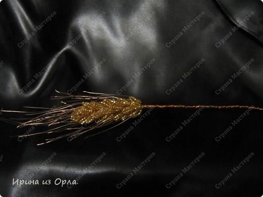 Такой полевой букет вырос у меня. Сейчас на полях цветет много ромашек, васильков. Уже начинает созревать пшеница.  фото 11