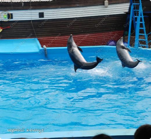 Дельфинарий фото 3