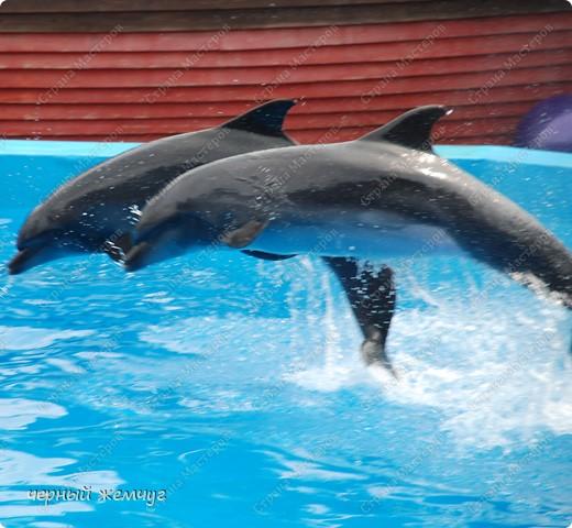 Дельфинарий фото 2