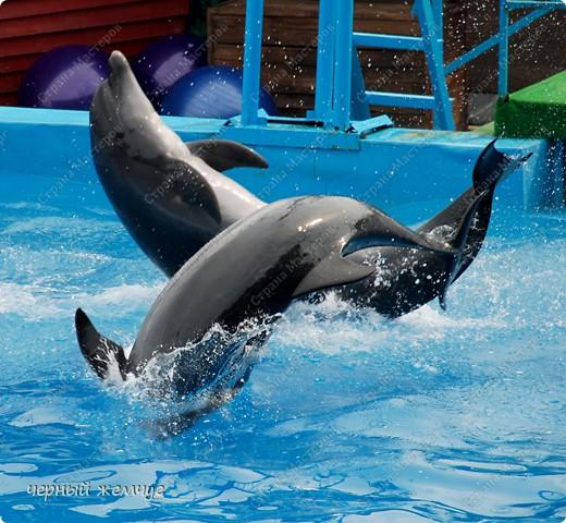 Дельфинарий фото 1