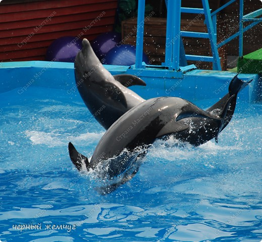 Дельфинарий фото 4