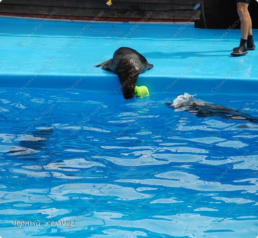 Дельфинарий фото 6