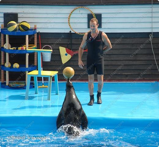 Дельфинарий фото 9