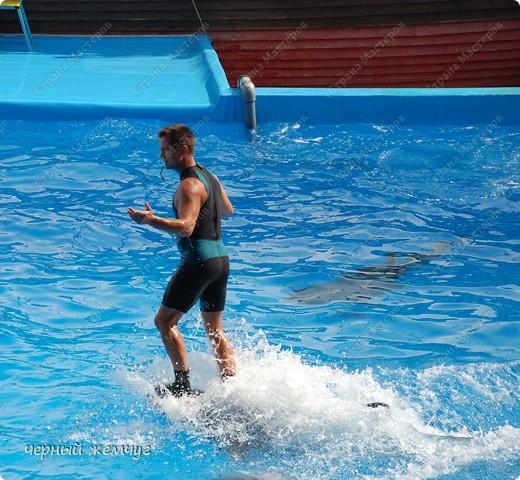 Дельфинарий фото 12