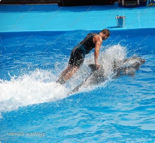 Дельфинарий фото 11