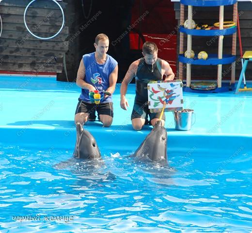 Дельфинарий фото 22