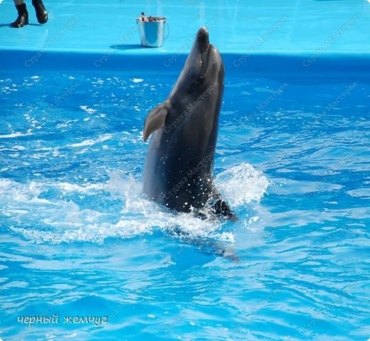 Дельфинарий фото 15