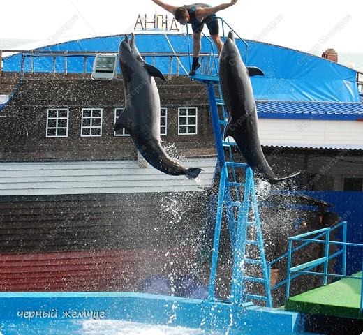 Дельфинарий фото 13