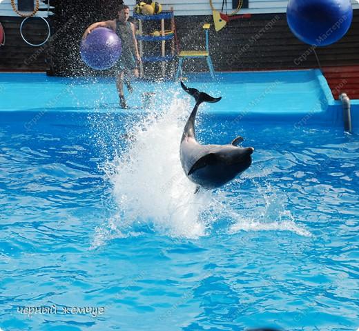 Дельфинарий фото 14