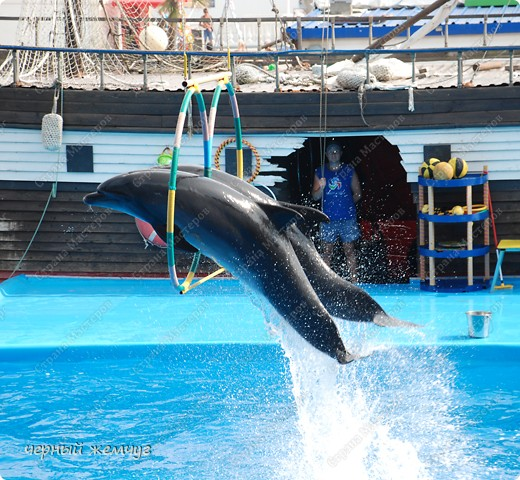 Дельфинарий фото 17