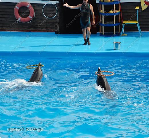 Дельфинарий фото 21