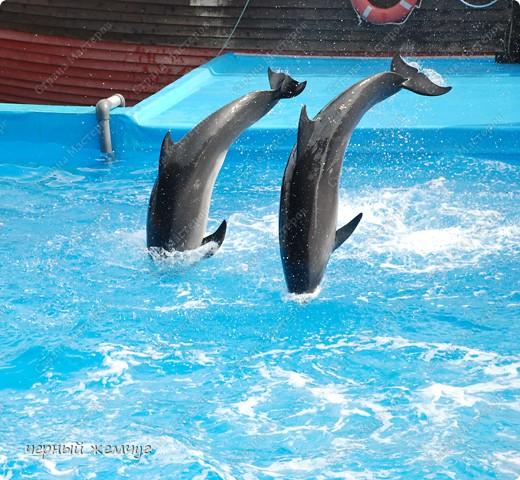Дельфинарий фото 18