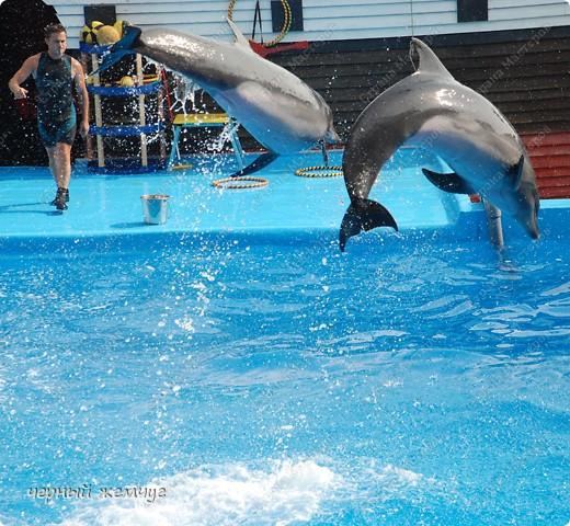 Дельфинарий фото 20
