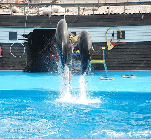 Дельфинарий фото 19