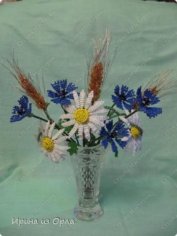 Такой полевой букет вырос у меня. Сейчас на полях цветет много ромашек, васильков. Уже начинает созревать пшеница.  фото 13