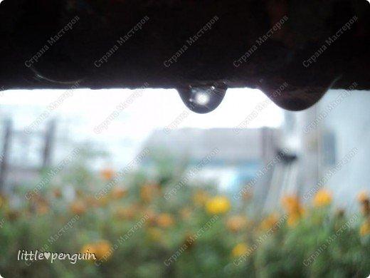 Сегодня пасмурная погода.Целый день идет дождь.А самое интересное занятие в такой день-фотографировать усыпанные хрустальными каплями цветы. фото 8