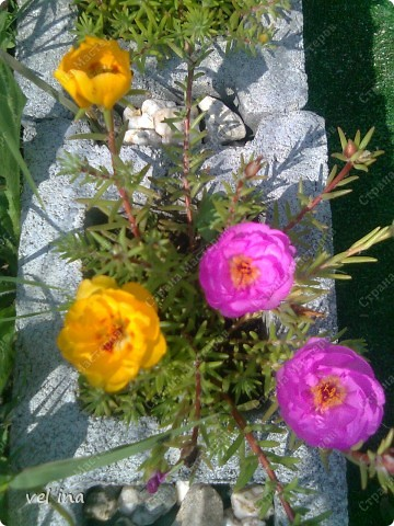цветы фото 16