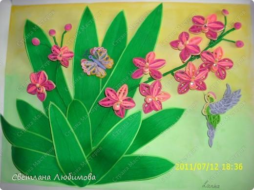 Очередная работа родилась под впечатлением картины Ольги Ольшак! Олечка спасибо за твои шедевры! На этом фото колибри можно рассмотреть получше. фото 2