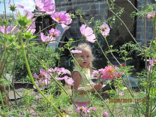 """наш газон """"Восточный орнамент"""". фирма Экзотика. 22 цветка, газон меняет свой облик в течение всего лета,сейчас он такой) никогда не видела раньше белые и розовые маки) фото 20"""
