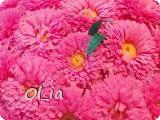 Цветущий горшочек фото 2