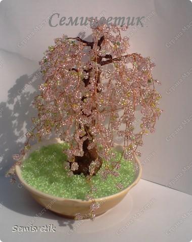 Поделка изделие Бисероплетение Деревья из бисера и бусин Бисер Бусинки Гипс Краска Проволока фото 1.