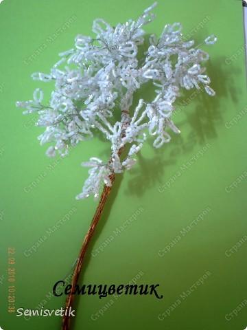 Дерево Инь-Янь фото 15