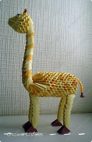 Жирафик фото 3
