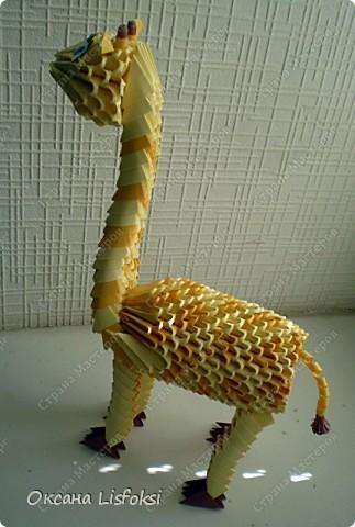 Жирафик фото 4