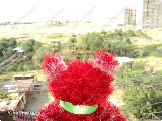 """Он добирался к нам очень долго! Родился в России. Проведал мою маму в центре Украины, и, наконец, дошел в Грузию! К нам! Поэтому первое что мы сделали - предложили дорогому гостю кресло! Где, свободно закинув лапку за лапку, котик важно представился: """"Огонек!"""" И попросил, если можно, вздремнуть с дороги!  фото 5"""