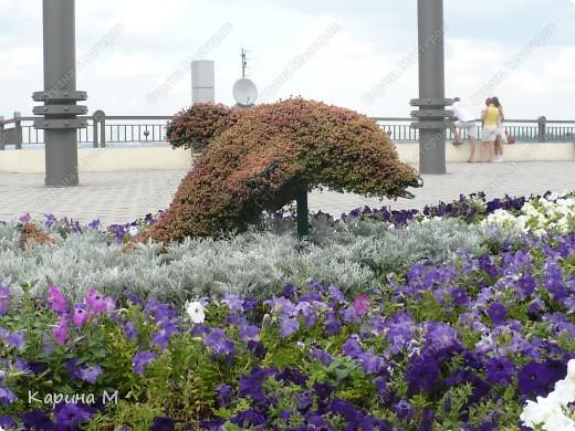 Центральный пляж, июль 2011 г. фото 7