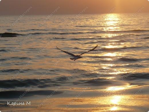 Море, чайка и закат... фото 1