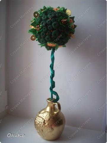 """Первый заказ """"Мандариновое дерево"""" (денежное дерево) фото 2"""