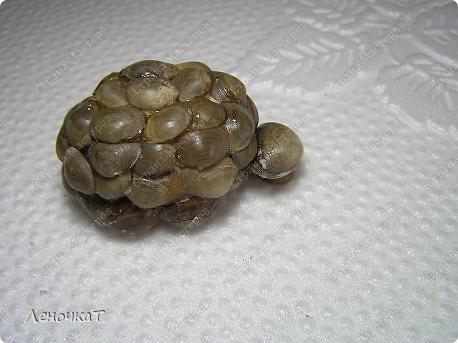 В  самом  начале  своего блога я  уже  выставляла   своих  черепашек  http://stranamasterov.ru/node/85234      Теперь вот созрела  на  МК. Возможно  кому-нибудь  да  пригодится... фото 12