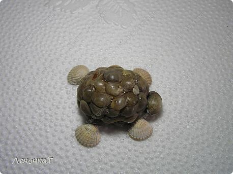 В  самом  начале  своего блога я  уже  выставляла   своих  черепашек  http://stranamasterov.ru/node/85234      Теперь вот созрела  на  МК. Возможно  кому-нибудь  да  пригодится... фото 16