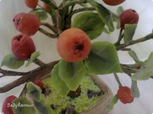Вот и моё деревце из холодного фарфора. Огромное спасибо Светлане SVET1301 ( http://stranamasterov.ru/user/68349 ) за МК!   фото 1
