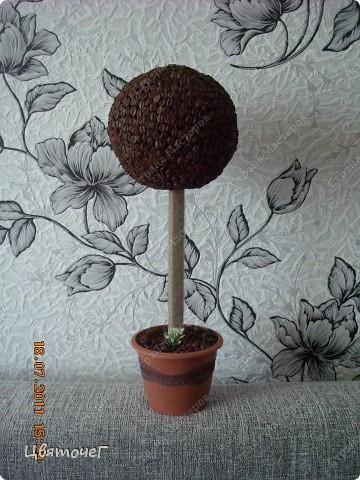 мои первые деревца ) фото 2