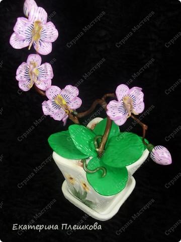 Фаленопсис (Phalaenopsis) из пластики. фото 4