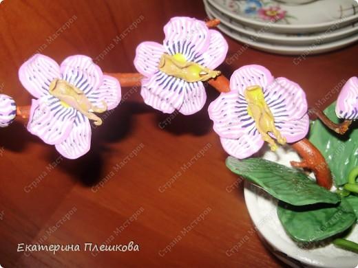 Фаленопсис (Phalaenopsis) из пластики. фото 3