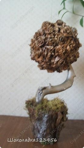 Дерево сделано из природного материала.Розочки сделаны из кленовых листьев.Тонированы золотой краской из баллончика.Наклеены на шар сухого оазиса,приклеены на горячий клей.Вазон оклеен корой сосны с добавлением мха.Внутри вазона цемент для устойчивости дерева.  фото 6