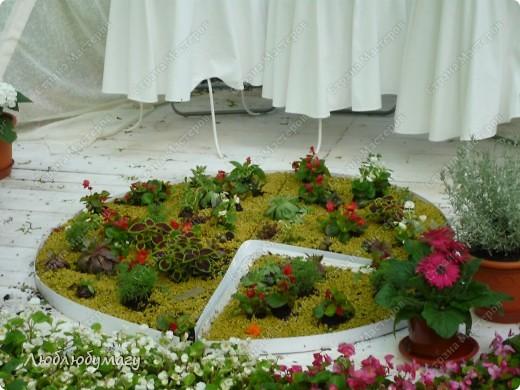 В Санкт- Петербурге в Михайловском саду ежегодно проводится фестиваль ландшафтного искусства. Хочу вам, дорогие мастерицы, показать, что мы там увидели в этом году. фото 30