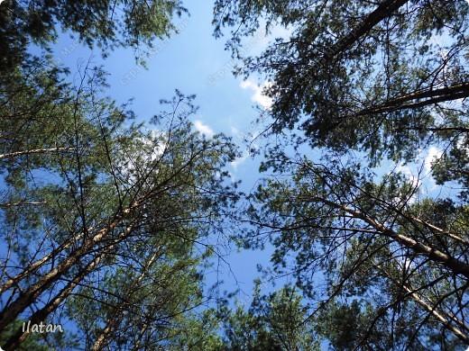 Привет, привет мои хорошие!  Сегодня, если Вы не против...едем в лес....!!!!  Ну Вы .....виртуально...это понятно..., а я как раз вернулась оттуда....и хочу с Вами поделиться красотой нашей Матушки Природы!  То что идем...? Ну то вперед! фото 2