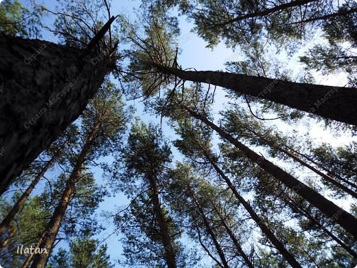 Привет, привет мои хорошие!  Сегодня, если Вы не против...едем в лес....!!!!  Ну Вы .....виртуально...это понятно..., а я как раз вернулась оттуда....и хочу с Вами поделиться красотой нашей Матушки Природы!  То что идем...? Ну то вперед! фото 8