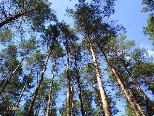 Привет, привет мои хорошие!  Сегодня, если Вы не против...едем в лес....!!!!  Ну Вы .....виртуально...это понятно..., а я как раз вернулась оттуда....и хочу с Вами поделиться красотой нашей Матушки Природы!  То что идем...? Ну то вперед! фото 14