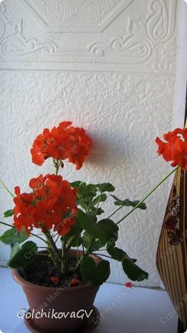 В последнее время полюбила герани. Сейчас они обильно цветут, а вот зимой цветов почти нет, моя искусственная герань будет цвести постоянно. фото 14