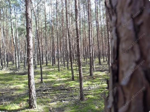 Привет, привет мои хорошие!  Сегодня, если Вы не против...едем в лес....!!!!  Ну Вы .....виртуально...это понятно..., а я как раз вернулась оттуда....и хочу с Вами поделиться красотой нашей Матушки Природы!  То что идем...? Ну то вперед! фото 7