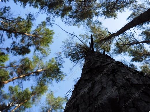 Привет, привет мои хорошие!  Сегодня, если Вы не против...едем в лес....!!!!  Ну Вы .....виртуально...это понятно..., а я как раз вернулась оттуда....и хочу с Вами поделиться красотой нашей Матушки Природы!  То что идем...? Ну то вперед! фото 9