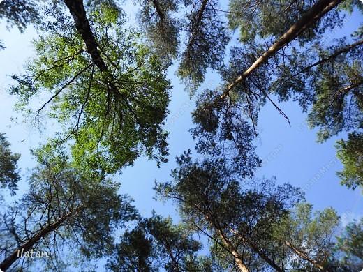 Привет, привет мои хорошие!  Сегодня, если Вы не против...едем в лес....!!!!  Ну Вы .....виртуально...это понятно..., а я как раз вернулась оттуда....и хочу с Вами поделиться красотой нашей Матушки Природы!  То что идем...? Ну то вперед! фото 13