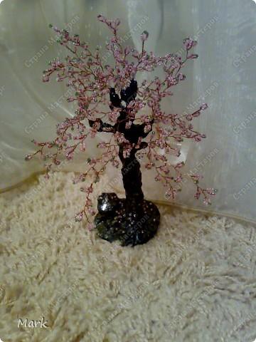 деревья 5 фото фото 1