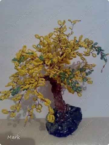 деревья 5 фото фото 5